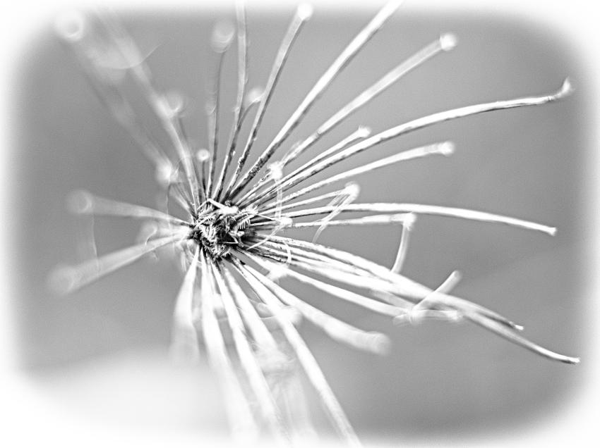 Wild spider ( arraignée sauvage)  987372arraignesauvage