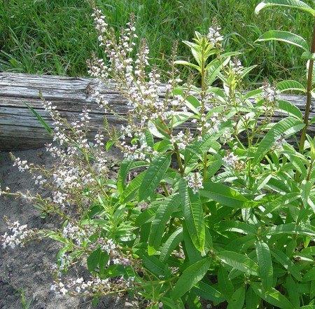نباتات وأعشاب بلادي 9901014863374835577283647512025097911n