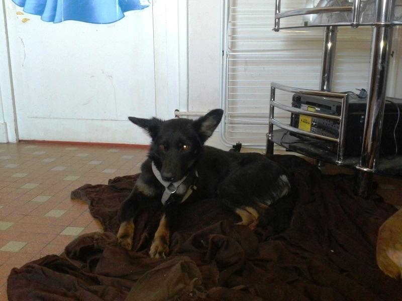 > Mika, un amour de petite chienne, née en mai 2011 - Adoptée 9909662012015