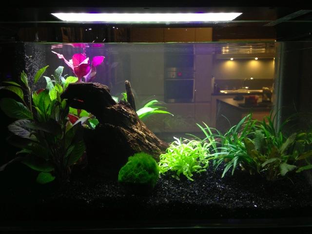 Mon SuperFish Home 25 991962IMG0045