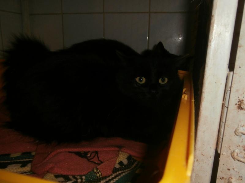 PRALINE ( Femelle x Angora Noir ) 999424PB291792