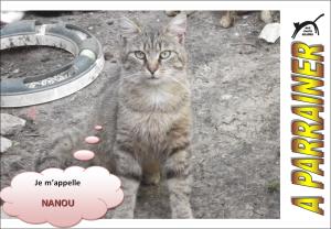 Nouveau-chats-eclopes Mini_124035Nanou