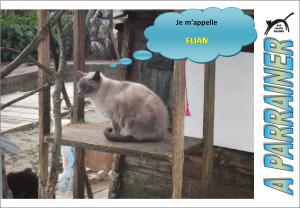 Nouveau-chats-eclopes Mini_124945Elian