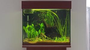 Nouveau bac 150L Amazonien  Mini_14552620160226172122