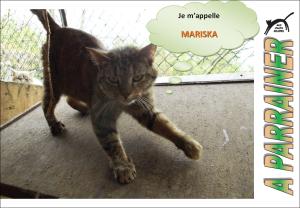 Nouveau-chats-eclopes Mini_157565Mariska