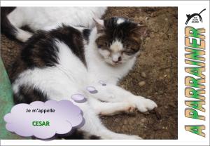 Nouveau-chats-eclopes Mini_187905Cesar