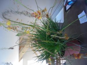 Plante grasse a identifier Mini_215786DSC00828