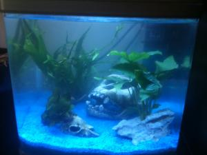 Conseil choix de plantes pour aquarium débutant Mini_216390IMG1836