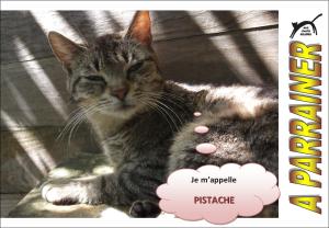 Nouveau-chats-eclopes Mini_236918Pistache