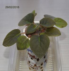 De la plantation à la floraison Mini_262954Bolshydro07
