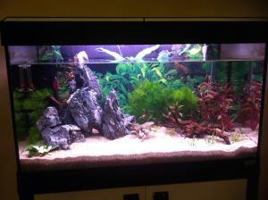 Aquarium 125L - asiatique- sable et déponit Mini_274385IMG1079