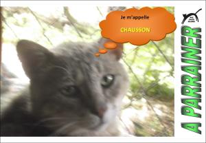 Nouveau-chats-eclopes Mini_283822Chausson