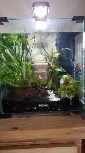 Aquarium acheté ! Mini_297196aquarium