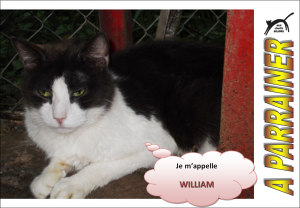 Nouveau-chats-eclopes Mini_298326William