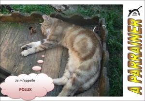 Nouveau-chats-eclopes Mini_304272Polux