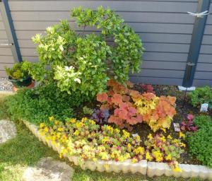 quelques plantouilles au jardin, en ce moment ! Mini_306079Mas