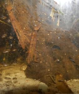 Ménagerie, plus de 3.000L d'aquariums Mini_313497CrevetteBambou0003