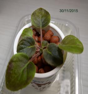 De la plantation à la floraison Mini_372056Bolshydro04