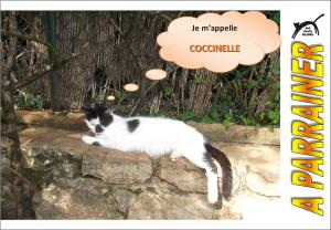 Nouveau-chats-eclopes Mini_377740Coccinelle