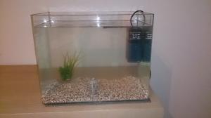 Aquarium axolotl Mini_382403axoloto2