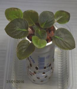 De la plantation à la floraison Mini_428030Bolshydro06
