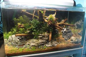 Mes bacs, une passion: l'aquariophilie!! Mini_429309IMG9908
