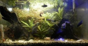 Filtration et betta Mini_4336313506