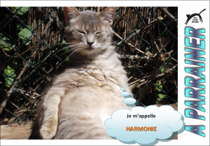Nouveau-chats-eclopes Mini_435105Harmonie