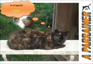 Nouveau-chats-eclopes Mini_437545Romy