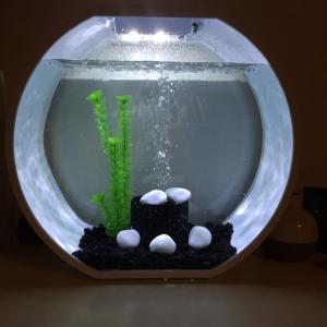 Aquarium pour combattant 20L Mini_452368IMG8473