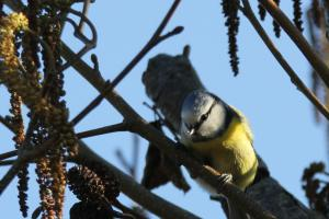 Oiseaux ...  (Staffilou) Mini_497035IMG67160
