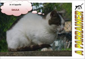 Nouveau-chats-eclopes Mini_497913Dalila