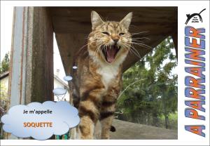 Nouveau-chats-eclopes Mini_501445Soquette
