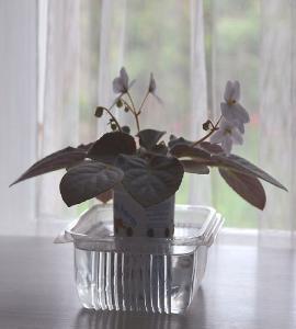 De la plantation à la floraison Mini_525172Bolshydro10