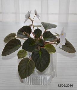 De la plantation à la floraison Mini_526002Bolshydro09