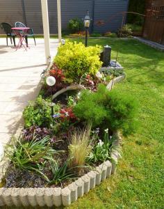 quelques plantouilles au jardin, en ce moment ! Mini_540235304