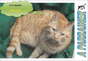 Nouveau-chats-eclopes Mini_542973Poupouf