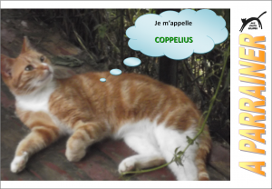 Nouveau-chats-eclopes Mini_544589Coppelius