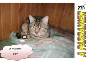 Nouveau-chats-eclopes Mini_552572Pat