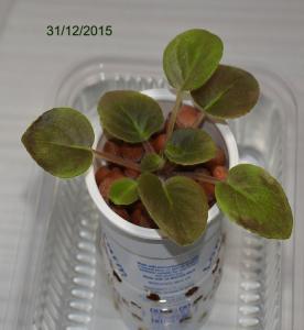 De la plantation à la floraison Mini_553160Bolshydro05