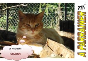 Nouveau-chats-eclopes Mini_565878Samson