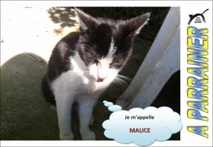 Nouveau-chats-eclopes Mini_584146Malice
