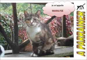 Nouveau-chats-eclopes Mini_589827Marilyse