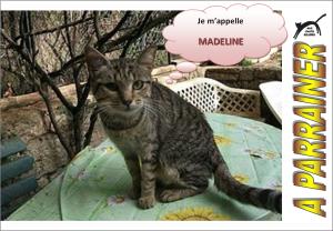 Nouveau-chats-eclopes Mini_611658Madeline