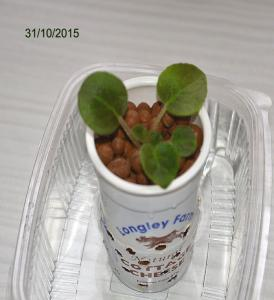 De la plantation à la floraison Mini_648586Bolshydro03