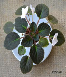 De la plantation à la floraison Mini_662843Bolshydro11