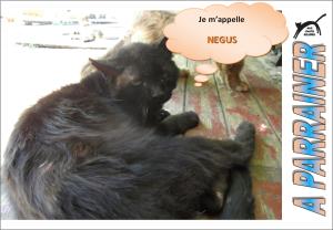 Nouveau-chats-eclopes Mini_675007Ngus