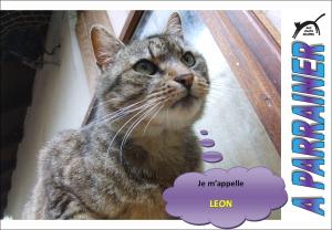 Nouveau-chats-eclopes Mini_682565Lon