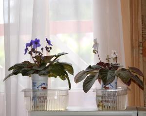 De la plantation à la floraison Mini_683075aprsbain
