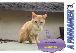 Nouveau-chats-eclopes Mini_683469Clmentine